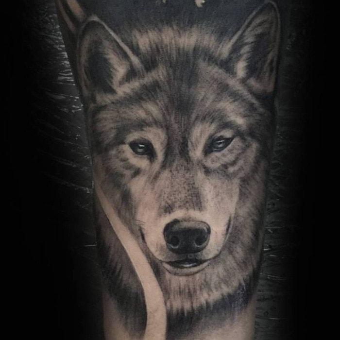 Lobo amable